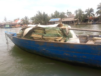 Cam Thanh 2