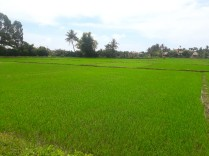Camp de orez