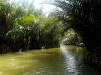 Water Coconut Forest 1