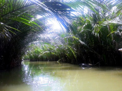 Water Coconut Forest 3