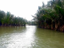 Water Coconut Forest 6