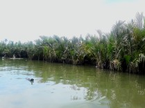 Water Coconut Forest