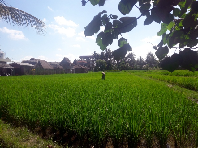 fermier bali indonezia drumetie jalan kajeng walk natur